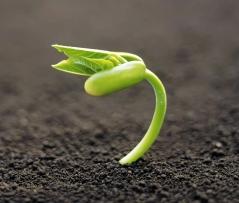 plant_new_life-1920x1200