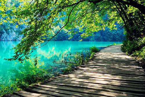 http://thehealingproject3.files.wordpress.com/2012/09/beautiful-amazing-nature-tree-water-lake-green-color-photo-photography-favim-com-461737_large.jpg?w=980