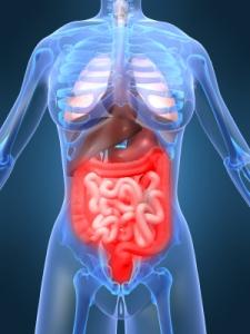 bowel